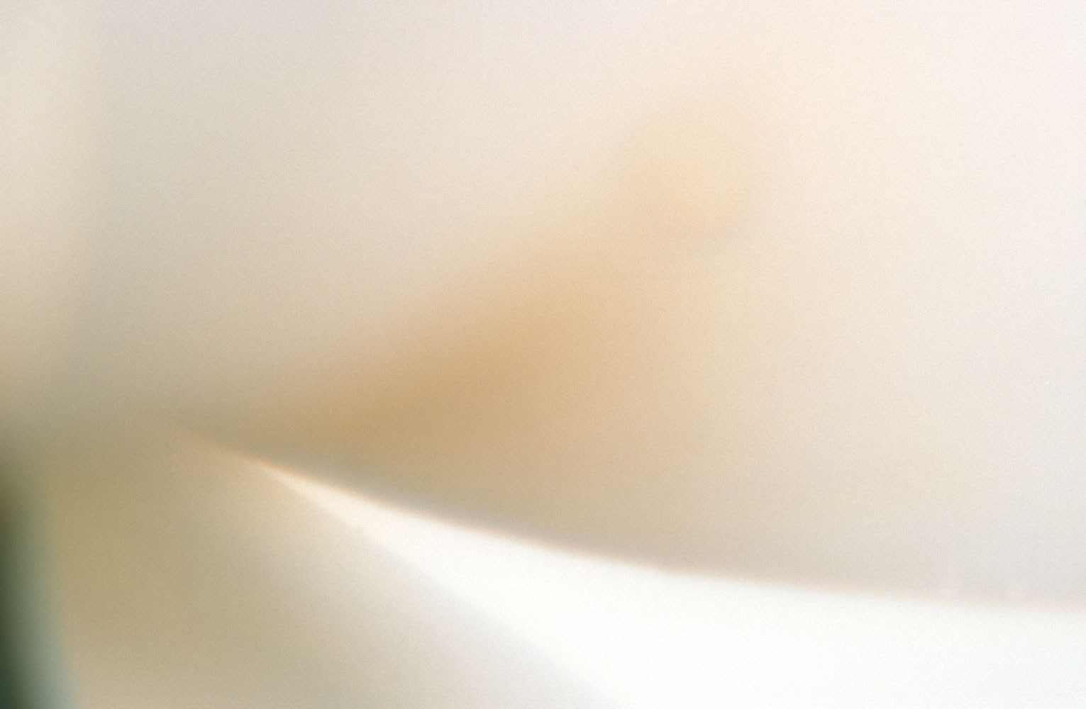 close:   lily   sensual   curves   tender   ivory   loins  surrender  intimacy   grace   serene       abstract