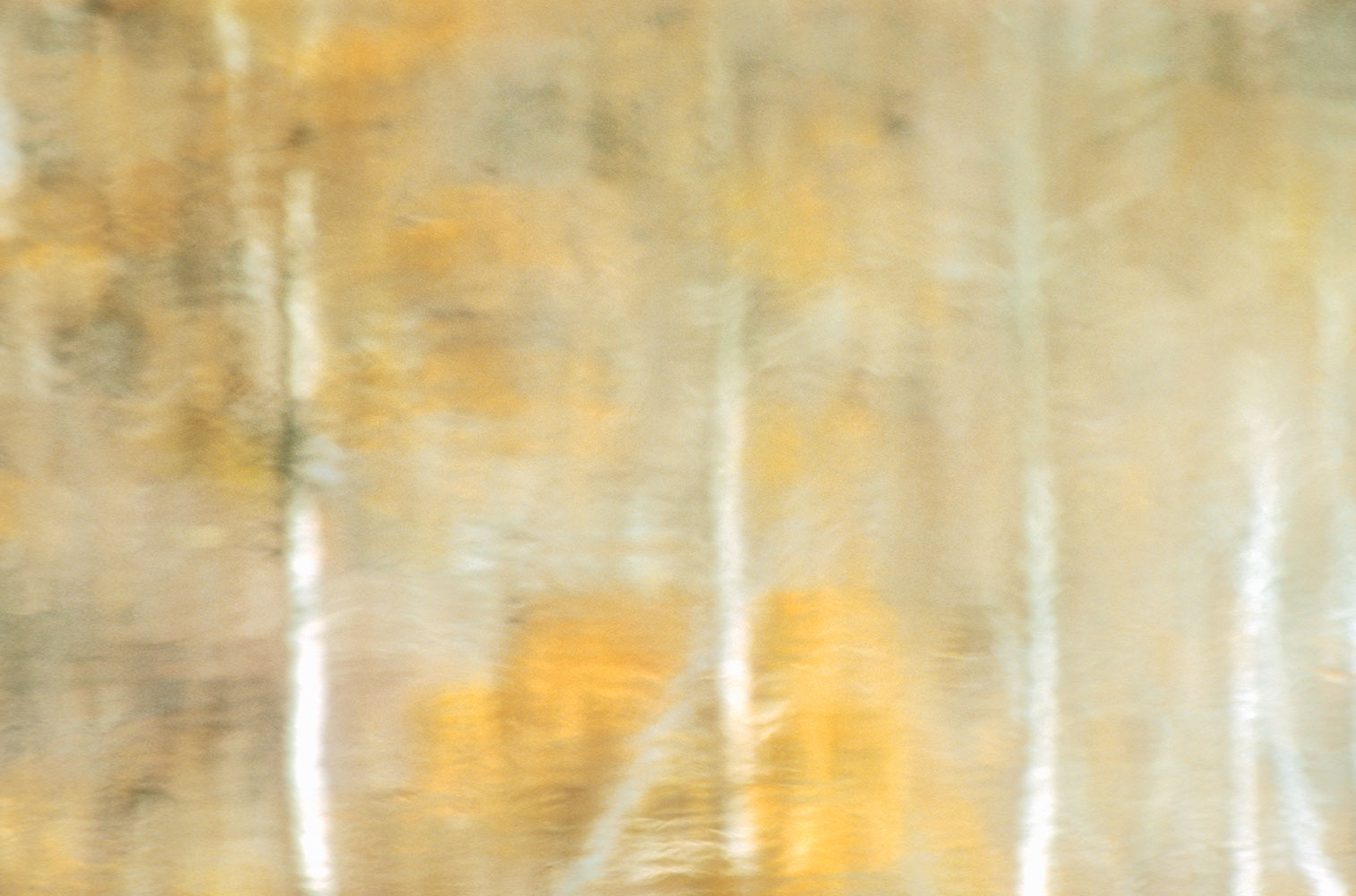 reflection   autumnal  gold-Aspens  soft  Lundy-Canyon   serene   meditation     impressionist