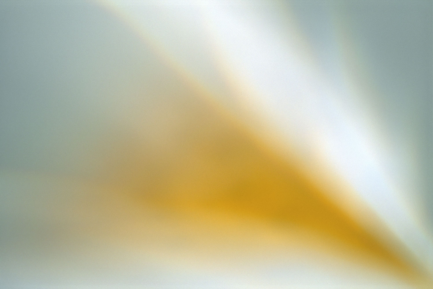 light-breaks:     phenomena    ephemeral   illumination   desert    wildflower   mustard   teal     abstract