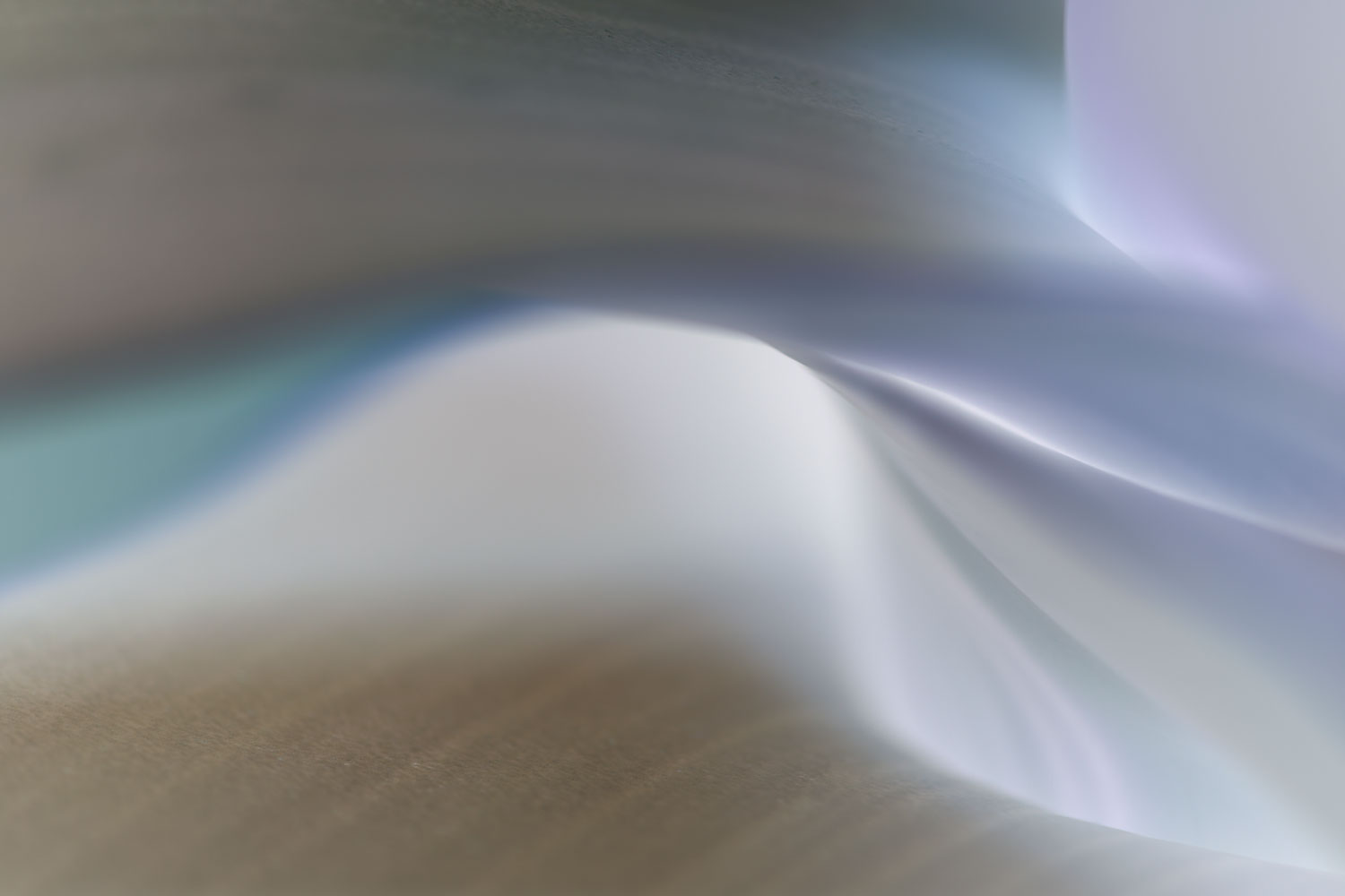 silk-slip:     waves    sensual     tidal   tender   movement   wild-Iris    Piedra-meadow    wildflower     southwest   abstract