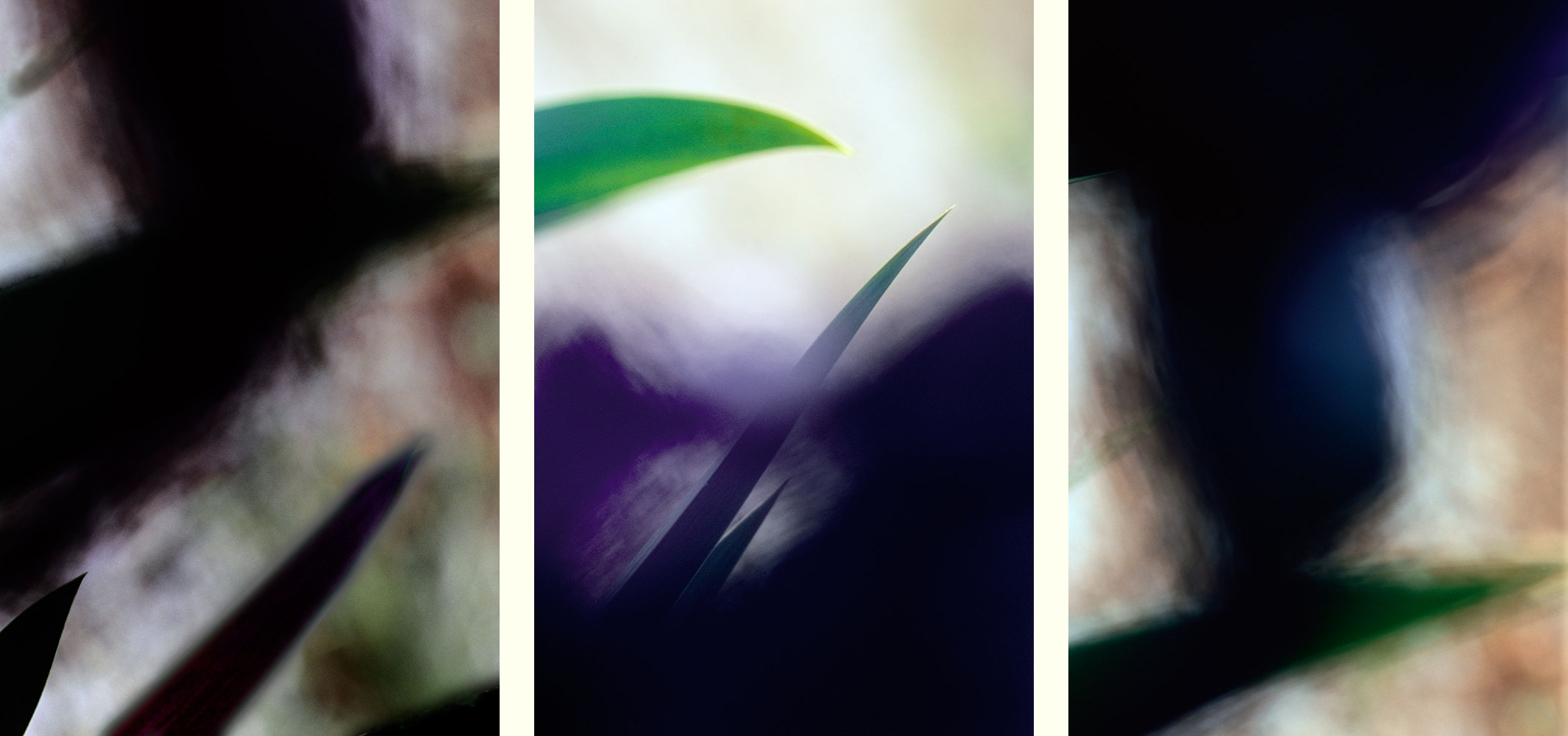 taking-back 1,2,3:       wild    Iris    garden   blades   danger   lance  mystery     lacerating   tonal   texture   intensity     abstract